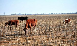 Why climate change is killing Africa_image 2